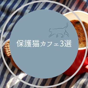 鎌倉の保護猫カフェ3選!鎌倉の猫たちの里親になりたい方必見!