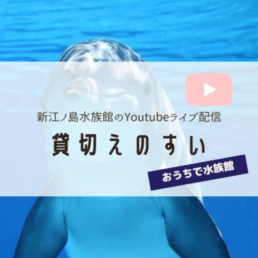 貸切えのすい 新江ノ島水族館休館中の生き物の様子をYouTubeでライブ配信!